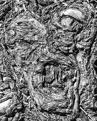 Crazy Roots, photograph, 10x8 inches